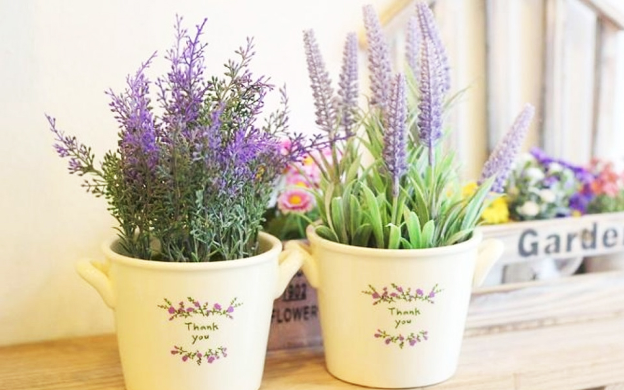 cach-trong-hoa-lavender