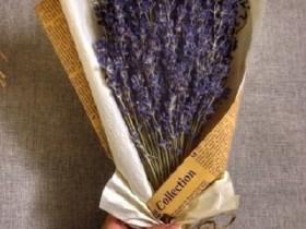 hoa-lavender-lvd02