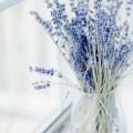 lavender-oai-huong-tim