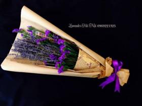 Hoa Lavender LVD04