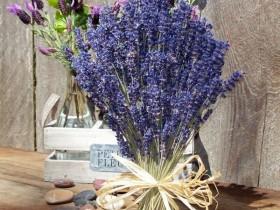 Hoa-Lavender-Lav01