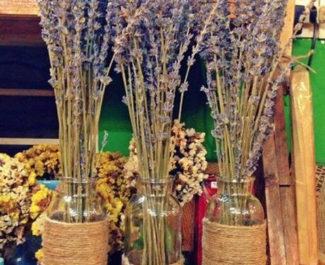Lo-hoa-Lavender-LHLav04