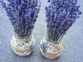 Lo-hoa-Lavender-LHLav13