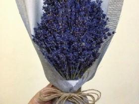 hoa-lavender-lvd03