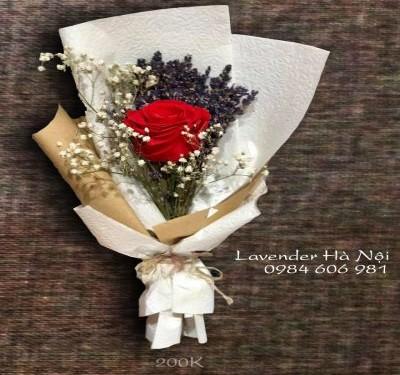 Hoa lavender LVD12