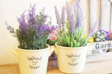 Hướng dẫn cách trồng hoa Lavender