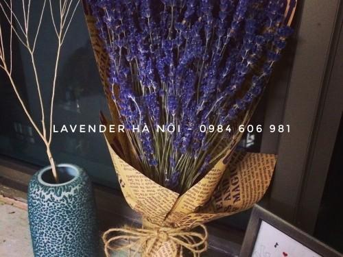 Hoa Lavender LVD14
