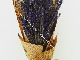 Hoa Lavender LVD13